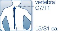lunghezza colonna vertebrale